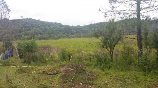 Área à venda, 103000 m² por r$ 700.000,00 - borda do campo - são josé dos pinhais/pr - Foto 4