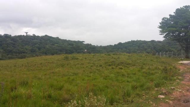 Área à venda, 103000 m² por r$ 700.000,00 - borda do campo - são josé dos pinhais/pr - Foto 14