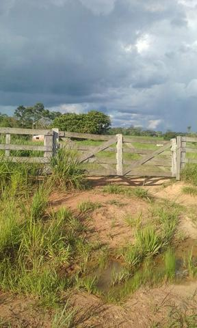 Área de Terra com 75 hectares - Foto 6