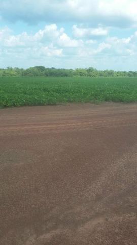 Fazenda de 462 Ha , 300 Ha Lavoura . Redenção - PA .permuta 70% em Fazenda no Paraná - Foto 8