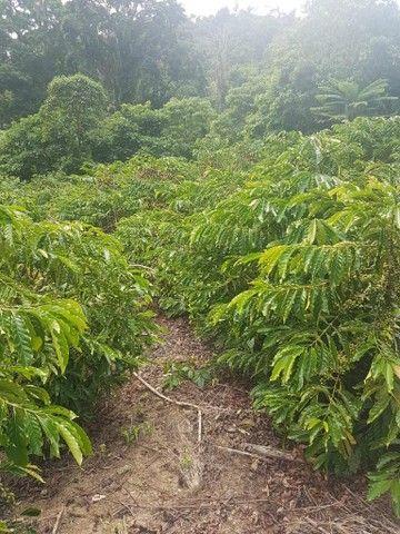 Fazenda excelente pra agropecuária - Foto 4
