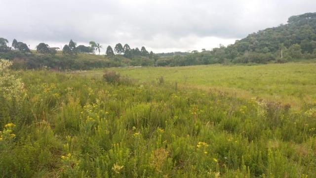 Área à venda, 103000 m² por r$ 700.000,00 - borda do campo - são josé dos pinhais/pr - Foto 8