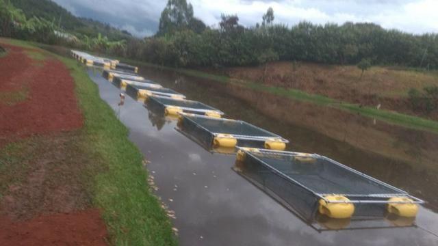 Tanque rede - piscicultura - usado
