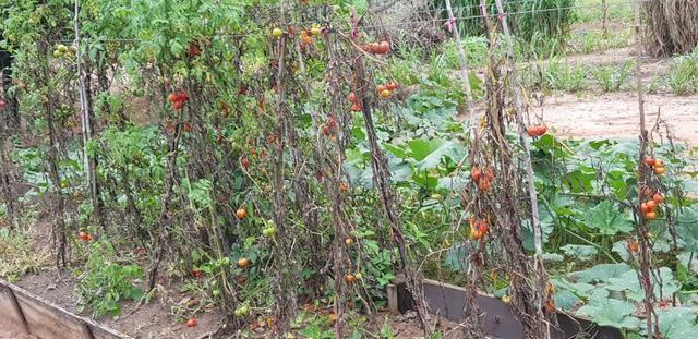 3200 Hectares,Pecuária,Lavoura,Frutífera,Faço Permuta,Conquista Doeste-MT, - Foto 6