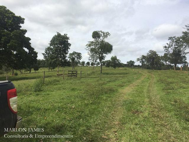 Fazenda no Município de Ipameri-Go - Foto 6