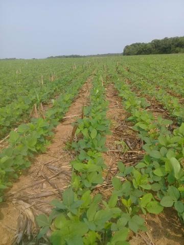 Fazenda de 462 Ha , 300 Ha Lavoura . Redenção - PA .permuta 70% em Fazenda no Paraná - Foto 4