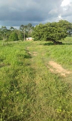 Área de Terra com 75 hectares - Foto 5