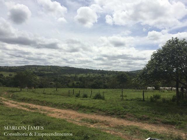 Fazenda no Município de Ipameri-Go - Foto 20