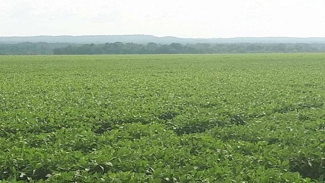 Fazenda de 462 Ha , 300 Ha Lavoura . Redenção - PA .permuta 70% em Fazenda no Paraná - Foto 3