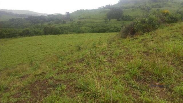 Fazenda à venda, 2541000 m² por r$ 3.675.000 - fazenda velha - nova laranjeiras/pr - Foto 12
