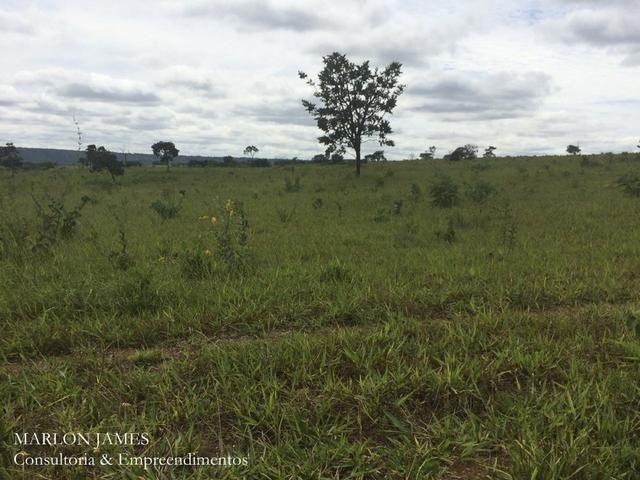 Fazenda no Município de Ipameri-Go - Foto 8