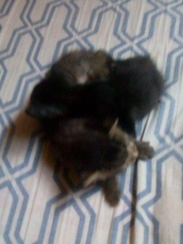Lindos gatinhos - Foto 2