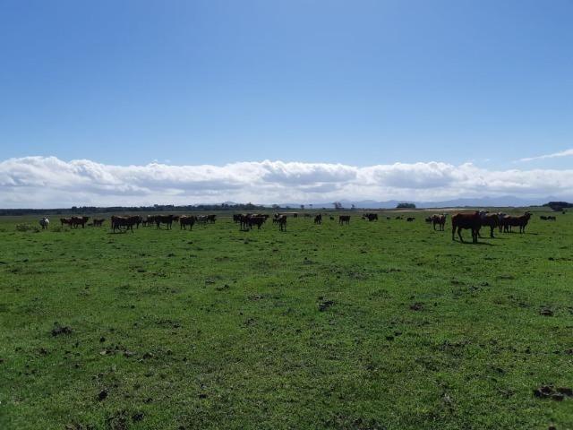 Fazenda 390 ha Multiprodutiva no Litoral RS - Foto 2