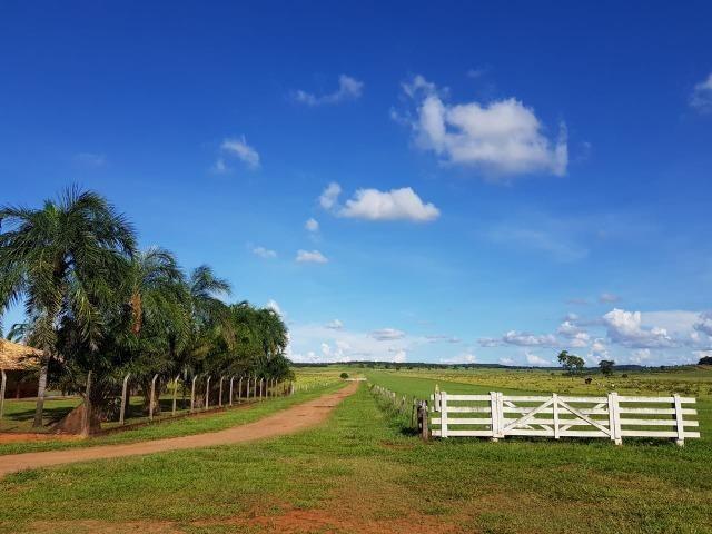 Fazenda em Campo Grande 4mil hectares!! - Foto 15