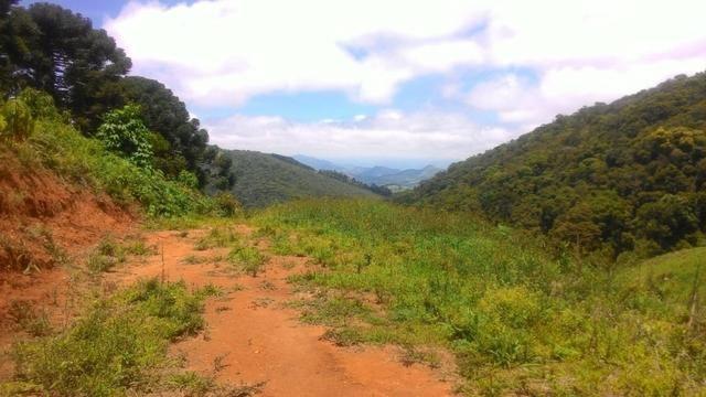 Lindo terreno de 2,8 hectares em Delfim Moreira Sul de Minas Gerais - Foto 5