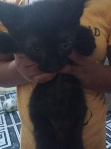Doação de gatinhos 3 fêmeas e um macho - Foto 3