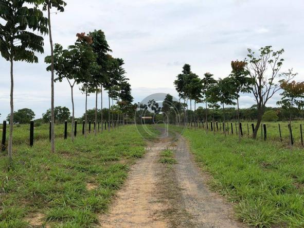 Fazenda 490 ha estrada de cáceres - Foto 3