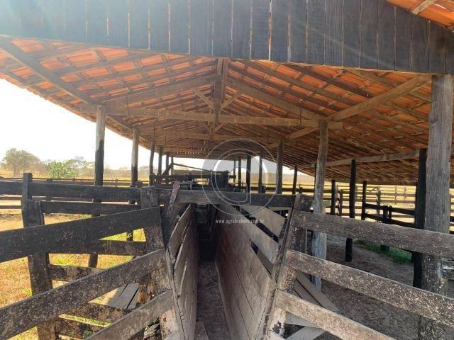 Fazenda 490 ha estrada de cáceres - Foto 17