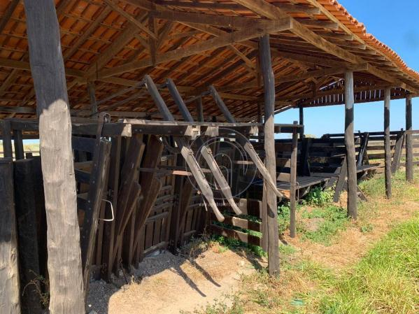 Fazenda 490 ha estrada de cáceres - Foto 10