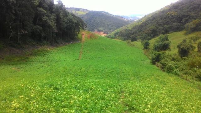 Lindo terreno de 2,8 hectares em Delfim Moreira Sul de Minas Gerais - Foto 10