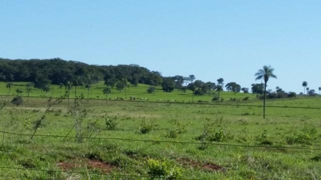 Fazenda em Campo Grande 4mil hectares!! - Foto 14