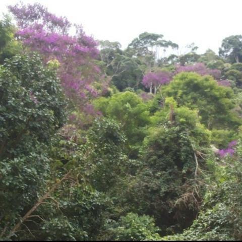 Sitio em Domingos Martins (Pedra Branca) - Foto 5