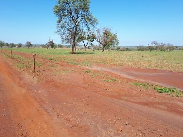 Fazenda em Campo Grande 4mil hectares!! - Foto 18