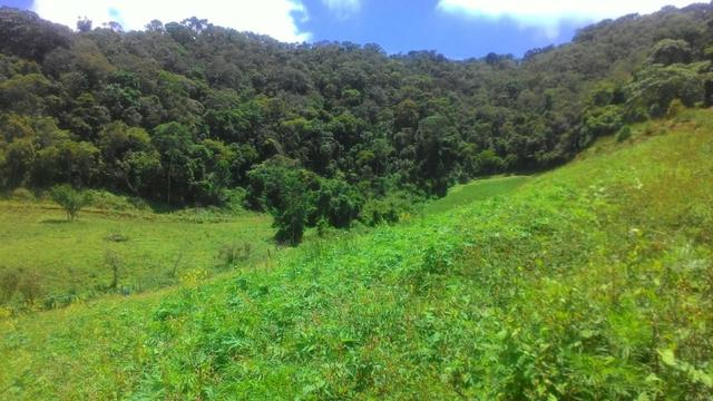 Lindo terreno de 2,8 hectares em Delfim Moreira Sul de Minas Gerais - Foto 6