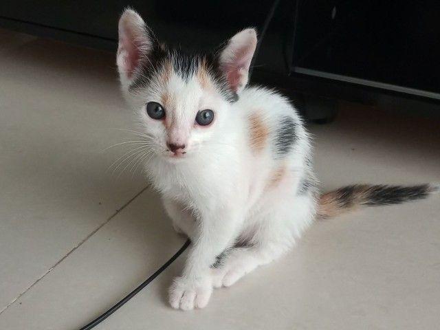 Adote um gatinho! - Foto 3