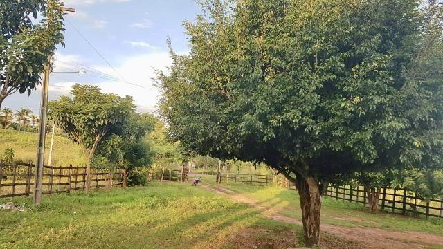 Fazenda com 430 hectares Proximo de Pedreiras - MA - Foto 2