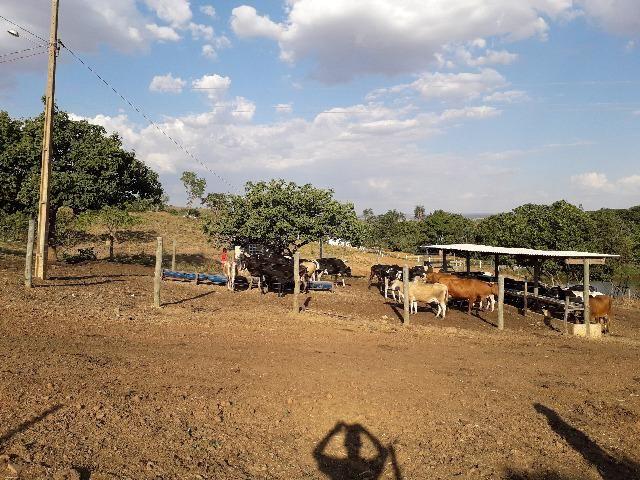 Fazenda à venda, por R$ 900.000.00 - Zona Rural - Luziânia/GO - Foto 15