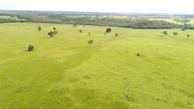 Fazenda em Campo Grande 4mil hectares!! - Foto 17