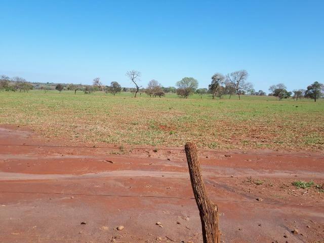 Fazenda em Campo Grande 4mil hectares!! - Foto 5