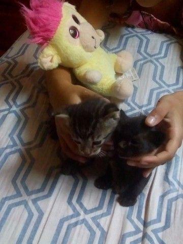 Lindos gatinhos - Foto 3