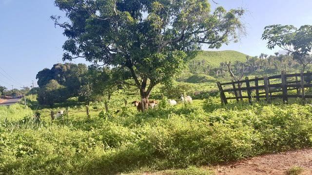Fazenda com 430 hectares Proximo de Pedreiras - MA - Foto 10
