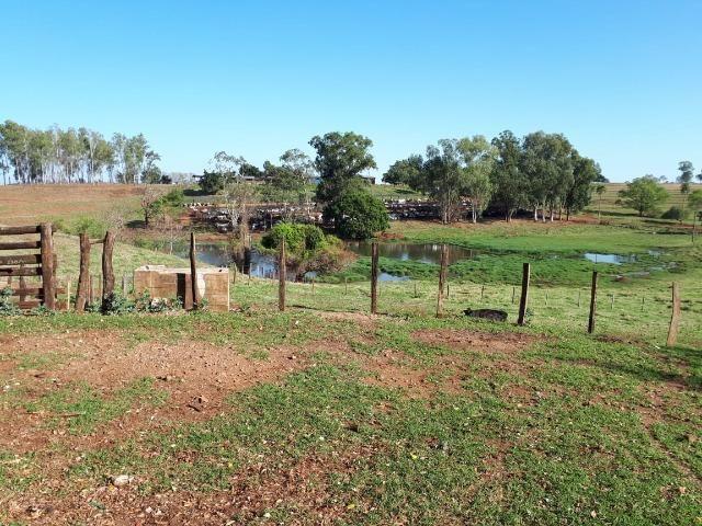 Fazenda em Campo Grande 4mil hectares!! - Foto 3