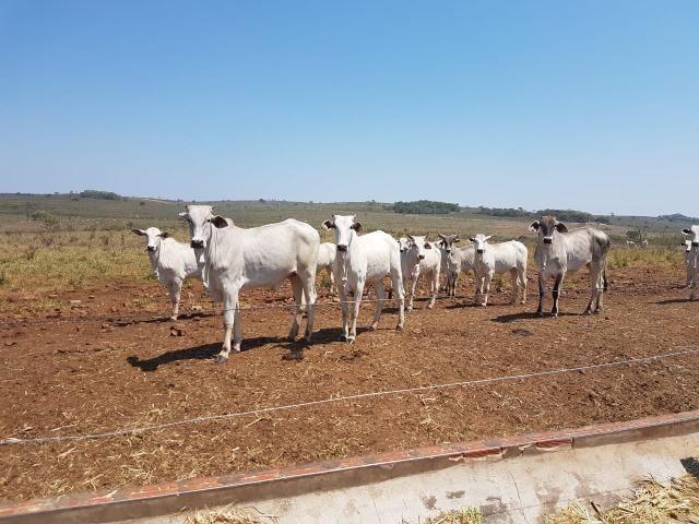 Fazenda em Campo Grande 4mil hectares!! - Foto 10