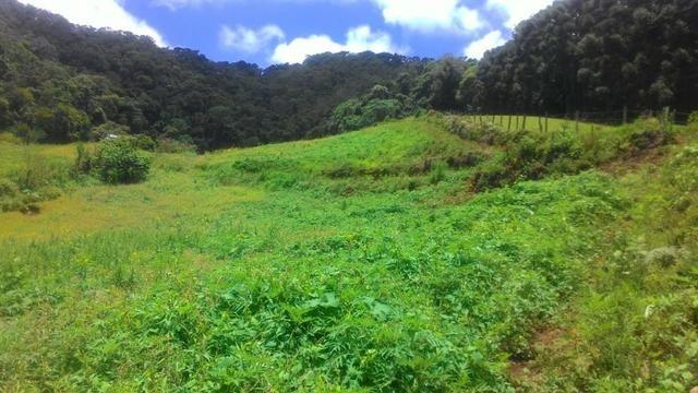 Lindo terreno de 2,8 hectares em Delfim Moreira Sul de Minas Gerais - Foto 3