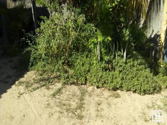 Casa à venda em areia branca zona de expansão - Foto 3