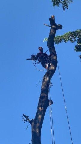 Corte e poda de árvores * - Foto 4