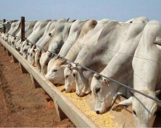 Confinamento bovino e outros!