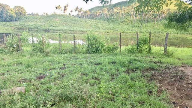Fazenda com 430 hectares Proximo de Pedreiras - MA - Foto 4
