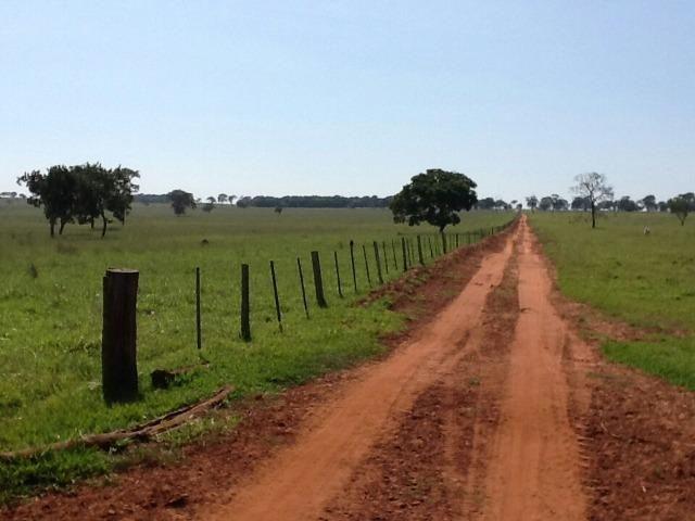 Fazenda em Campo Grande 4mil hectares!! - Foto 6