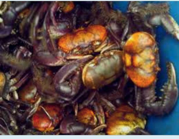 Caranguejo para revenda $ 1.99 - Foto 5