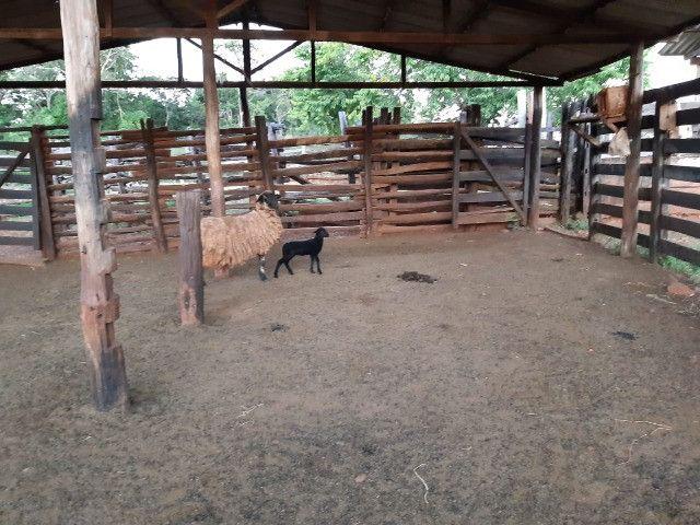 Fazenda de 386 hectares. São Gabriel do Oeste - Foto 6