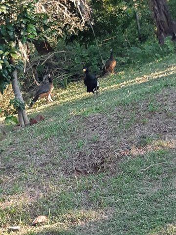 Fazenda de 386 hectares. São Gabriel do Oeste - Foto 2