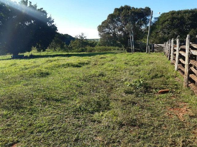 Fazenda de 386 hectares. São Gabriel do Oeste - Foto 8