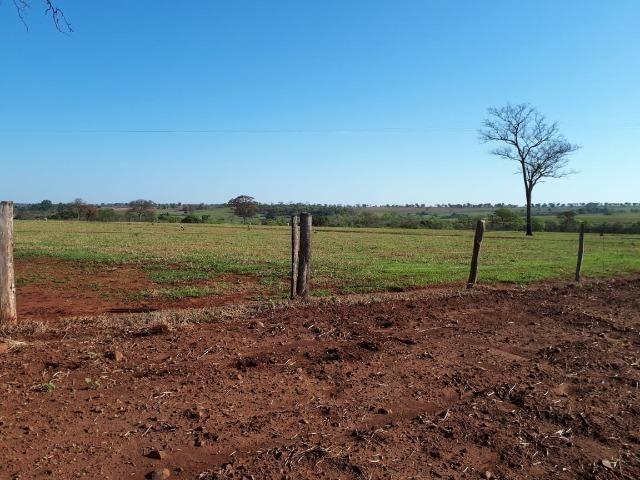 Fazenda em Campo Grande 4mil hectares!! - Foto 4