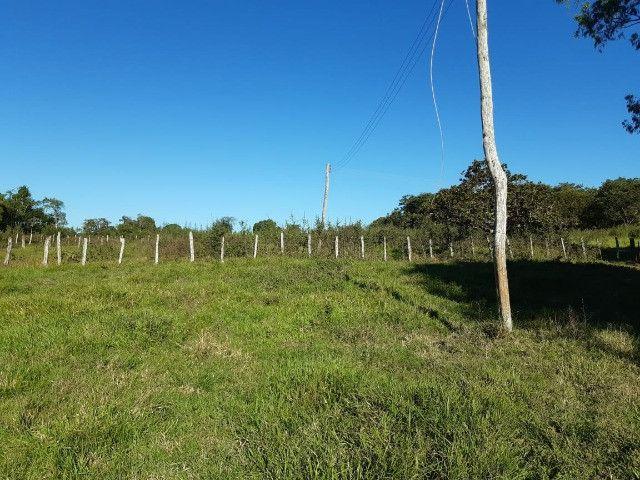 Fazenda de 386 hectares. São Gabriel do Oeste - Foto 7