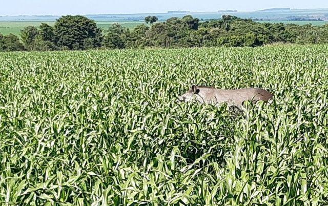 Fazenda de 386 hectares. São Gabriel do Oeste - Foto 15